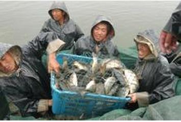 1990年渔业经济总产值_漳州渔业经济产值 日均一亿