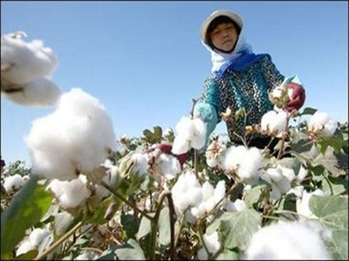 去年秋天收了棉花后,阿布都瓦依提·达吾提犁了棉花地就