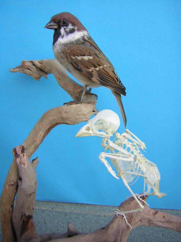 动物标本毛皮及骨骼标本