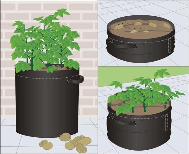 土豆种植袋