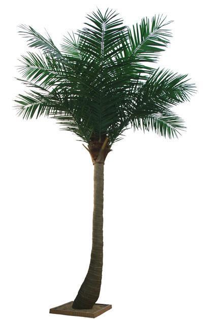 假树,夏威夷椰树