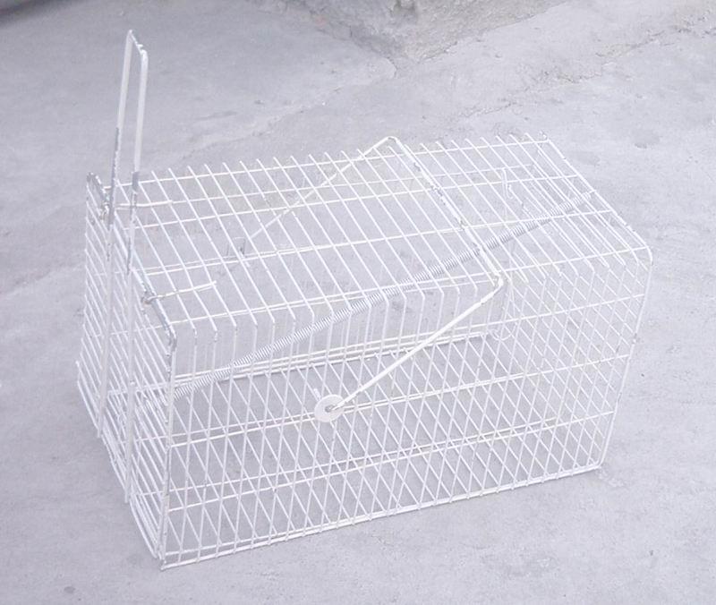 老鼠画法囹�a_老鼠笼