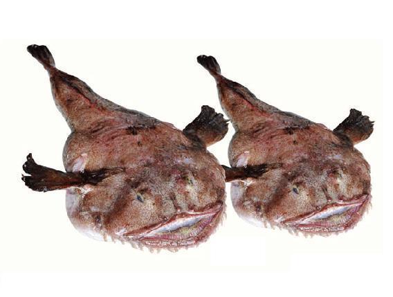 安康鱼图片