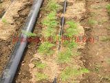 滴水管帶專業生產數十年 鶴壁浚縣農業大田滴灌