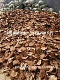 山東靈芝 赤靈芝片已產新 產地直銷 大量供應