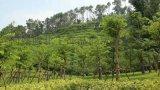 客土噴播邊坡綠化技術專用土壤粘合劑