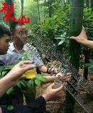 寧化純天然鮮竹酒批發價格