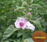 藥蜀葵提取物 Althaea Officinalis L