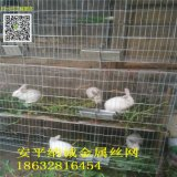 子母兔籠廠家,三層母兔籠,加密子母兔籠