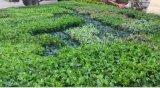 模擬植物牆 牆面綠化 植物牆生產 模擬綠植牆 模擬綠籬牆生產 重慶模擬植物牆 牆面綠化 植物牆生產 模擬綠植牆 模擬綠籬牆