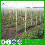 供應苗木支撐杆 7mm纖維杆 定做農業蔬菜拱棚