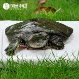 【河洲甲魚】麗水野生野生甲魚養殖|中華鱉批發