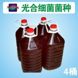 【廠家直銷】飼料添加劑 微生態製劑 光合細菌菌種