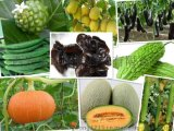 果蔬酵素15000活性單位