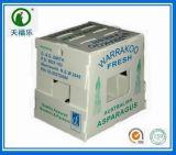 塑料中空板蘆筍包裝箱(6kg 7kg)