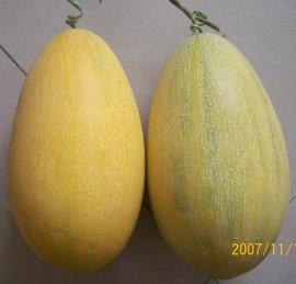模擬哈密瓜