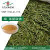 綠茶提取物 廠家直銷 茶多酚