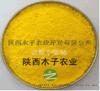 鹽酸小檗鹼 BerberineHydrochloride