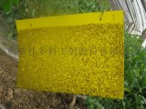 農業粘蟲板24*20的,廠家促銷,不流膠,不變形,不彎曲,質量保證