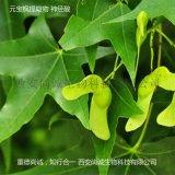 元寶楓籽提取物 天然神經酸5%-90% 尚誠生物