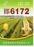 邯6172 邯6172小麥種子 邯6172高產小麥種 邯6172小麥良種 邯6172高產小麥良種 博信供
