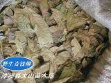 青錢柳葉(天然野生樹、降血糖)