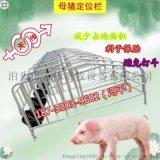 湖南新建豬場安裝新型定位欄母豬保胎欄