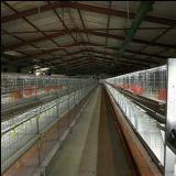 新旺興農高效益溫室大棚
