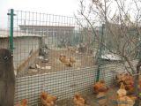 散養雞場鐵絲網圍欄、焊接圍欄網