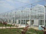 連棟花卉溫室-智慧大棚廠家