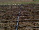 胡蘿蔔種植用水肥一體化滴灌系統,滴灌帶