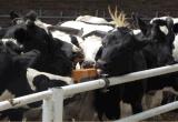牛羊舔磚,飼料舔磚,高密度營養型舔磚, 牛羊獸藥, 飼料鹽