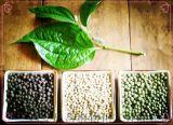 昌嶽供應 胡椒提取物10: 1 胡椒鹼98%