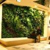 宜賓瀘州模擬植物牆 內江植物牆生產 雅安模擬綠植牆 達州廣安模擬綠植牆 宜賓瀘州模擬植物牆 內江植物牆生產 雅安模擬綠植牆 達州廣安模擬綠植牆 宜賓
