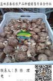 批發乾香菇|銷售香菇菌種|香菇種植技術|藍田秦農合作社