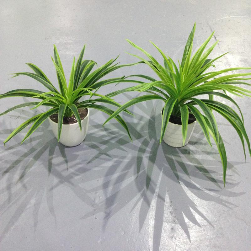 模拟塑胶草 蚌兰芒草 植物墙装饰小盆景 盆栽墙面装饰
