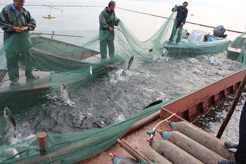 元春渔具最新研发简单的捕鱼专用充气擡网