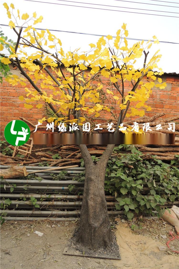 许愿树金色叶子榕树