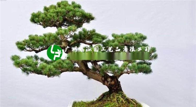 模拟松柏树,假树,假松树柏树模拟小松树