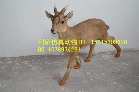 麂子逼真高端动物模型摆件装饰品野生动物模型展览