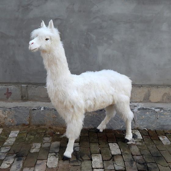 模拟羊驼模型摆件大型模拟皮毛动物真皮毛绒玩具大羊驼标本工艺品