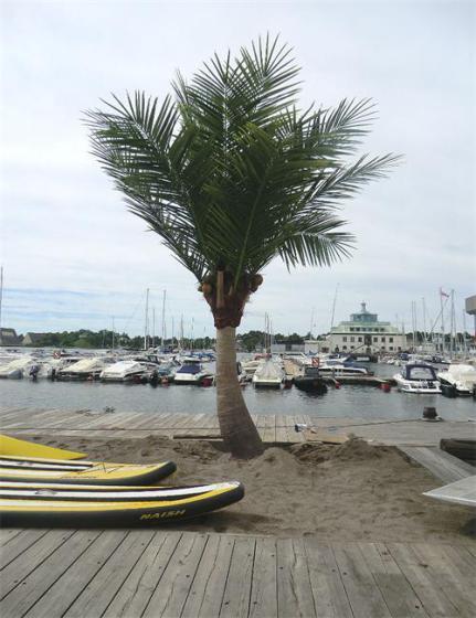 壁纸 树 棕榈树 431_560 竖版 竖屏 手机